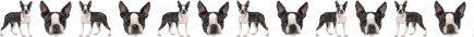 Boston Terrier Dog Breed Custom Printed Grosgrain Ribbon