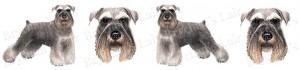 Miniature Schnauzer Dog Breed Ribbon Design