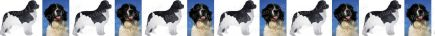 Black & White Newfoundland Dog Breed Custom Printed Grosgrain Ribbon