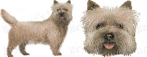 Cairn Terrier Dog Breed Ribbon Design