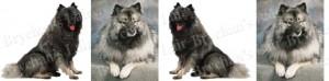 Keeshonden Dog Breed Ribbon Design