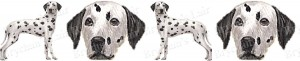 Dalmatian Black & White Dog Breed Ribbon Design