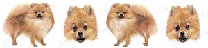 Pomeranian Dog Breed Ribbon Design