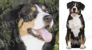 Entlebucher Mountain Dog Breed Ribbon Design