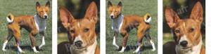 Basenjis Dog Breed Ribbon Design