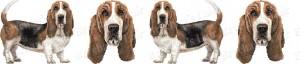 Bassett Hound Dog Breed Ribbon Design