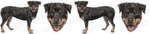 Rottweiler Dog Breed Ribbon Design