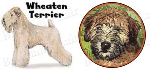 Wheaten Terrier Dog Breed Ribbon Design