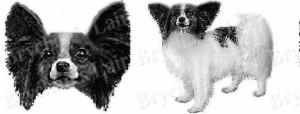 Black & White Papillon Dog Breed Ribbon Design