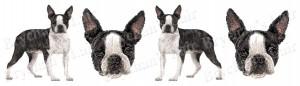 Boston Terrier Dog Breed Ribbon Design