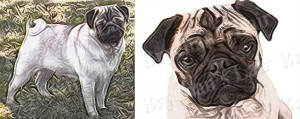 Fawn Pug Dog Breed Ribbon Design
