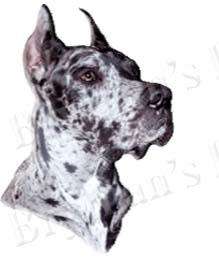 Great Dane Merle No2 Dog Breed Ribbon Design