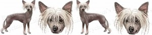 Chinese Crested Dog Breed Ribbon Design