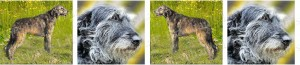 Irish Wolfhound Dog Breed Ribbon Design