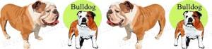Bulldog Dog Breed Ribbon Design