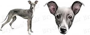 Italian Greyhound Dog Breed Ribbon Design