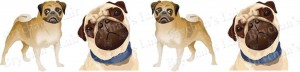 Pug Dog Breed Ribbon Design