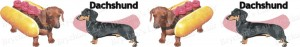 Dachshund No1 Dog Breed Ribbon Design