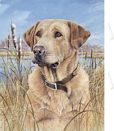 Yellow Labrador Retriever No4 Dog Breed Ribbon Design