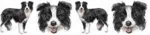 Border Collie Black & White Dog Breed Ribbon Design