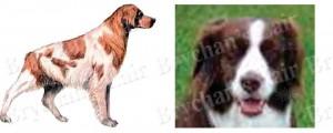Brittany Spaniel Dog Breed Ribbon Design