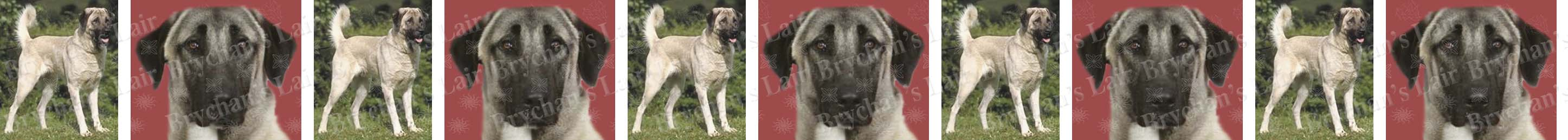 Anatolian Shepherd Dog Breed Custom Printed Grosgrain Ribbon
