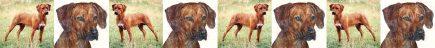 Rhodesian Ridgeback Dog Breed Custom Printed Grosgrain Ribbon