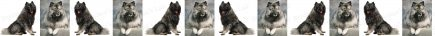 Keeshonden Dog Breed Custom Printed Grosgrain Ribbon