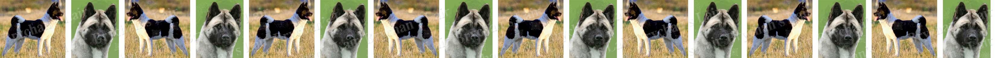 Akita Black & White Dog Breed Custom Printed Grosgrain Ribbon