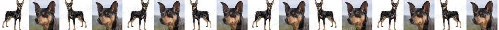 Miniature Pinscher Black & Tan Dog Breed Custom Printed Grosgrain Ribbon