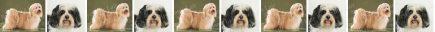 Havanese Dog Breed Custom Printed Grosgrain Ribbon