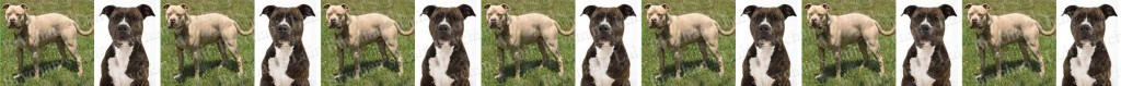 Pit Bull Dog Breed Custom Printed Grosgrain Ribbon
