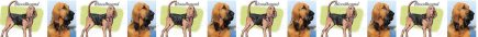 Bloodhound Dog Breed Custom Printed Grosgrain Ribbon
