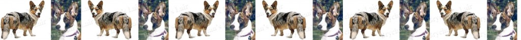Cardigan Welsh Corgi No1 Dog Breed Custom Printed Grosgrain Ribbon