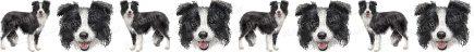 Black & White Border Collie Dog Breed Custom Printed Grosgrain Ribbon