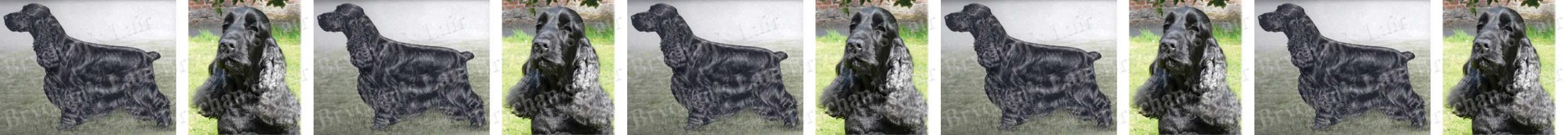 American Black Cocker Spaniel Dog Breed Custom Printed Grosgrain Ribbon