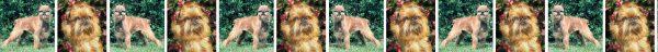 Brusells Griffon Dog Breed Custom Printed Grosgrain Ribbon