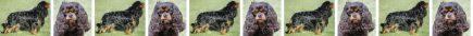 Black & Tan Cavalier King Charles Dog Breed Custom Printed Grosgrain Ribbon