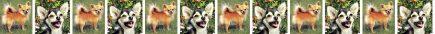 Long Haired Chihuahua Dog Breed Custom Printed Grosgrain Ribbon
