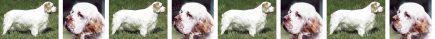 Clumber Spaniel Dog Breed Custom Printed Grosgrain Ribbon