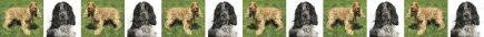English Cocker Spaniel Dog Breed Custom Printed Grosgrain Ribbon