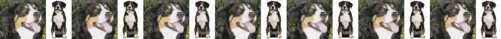 Entlebucher Mountain Dog Breed Custom Printed Grosgrain Ribbon