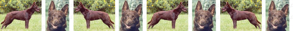 Australian Kelpie Dog Breed Custom Printed Grosgrain Ribbon