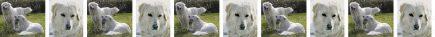 Maremma Dog Breed Custom Printed Grosgrain Ribbon