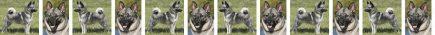 Norwegian Elkhound Dog Breed Custom Printed Grosgrain Ribbon