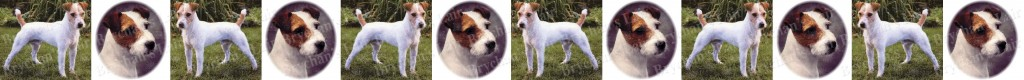 Parson Russell Terrier Dog Breed Custom Printed Grosgrain Ribbon