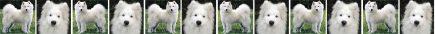 Samoyed Dog Breed Custom Printed Grosgrain Ribbon