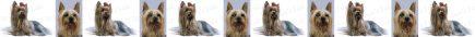 Silky Terrier Dog Breed Custom Printed Grosgrain Ribbon