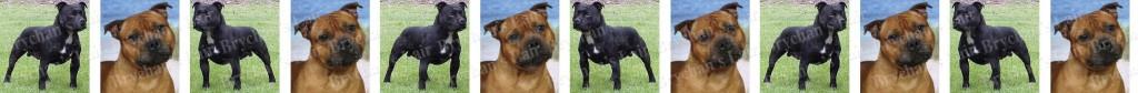 Staffordshire Bull Terrier Dog Breed Custom Printed Grosgrain Ribbon