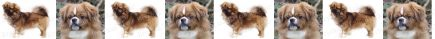 Tibetan Spaniel Dog Breed Custom Printed Grosgrain Ribbon